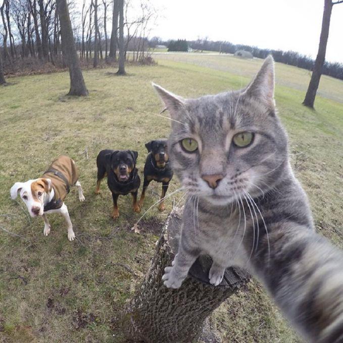 Nggak kalah kekiniannya nih sama anak zaman sekarang, kucing dan anjing pun juga ikutan selfie.