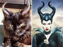 8 Kucing Lucu Ini Memiliki Wajah Seperti Tokoh Fiksi dalam Film, Coba Kamu Bandingkan !