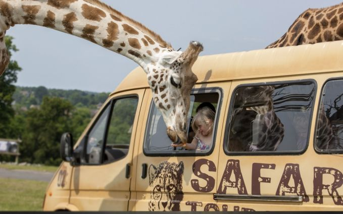 Bersafari di Kenya dan memberi makan Jerapah. Di Kenya, kamu bisa menikmati alam liar serta bersosialisasi langsung dengan hewan liar. Disini kamu bisa melihat berbagai macam hewan liar bebas berkeliaran seperti jerapah, zebra bahkan gajah. Istimewanya lagi, kamu juga bisa memberi makan hewan-hewan tersebut lho Pulsker!