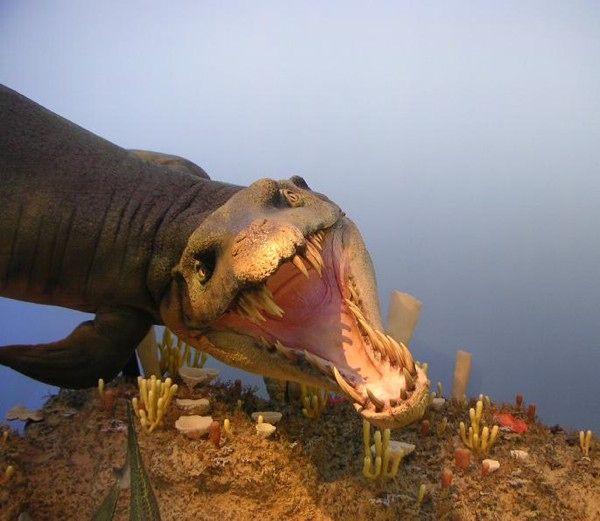 Berikutnya adalah Dakosaurus pulsker. Makhluk ini pertama kali ditemukan di Jerman dan dengan tubuh reptil ikan yang aneh. Dia juga salah satu predator teratas di lautan selama sisa jaman Jurassic. Fosil-fosilnya ditemukan di banyak tempat di seluruh dunia, dari Inggris hingga di Argentina. Hewan ini sering dihubungkan dengan buaya modern, dan bisa mencapai panjang hingga 5 meter. Giginya yang besar membuat para ilmuwan meyakini bahwa hewan ini adalah predator puncak di masanya berjuta tahun lalu.