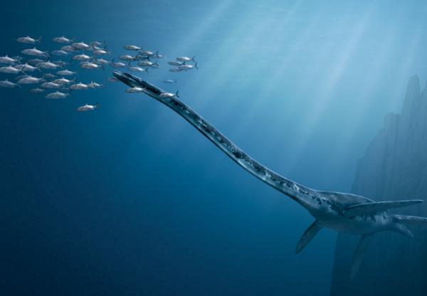 """Makhluk laut lainnya yakni Thalassomedon. Makhluk ini adalah namanya diambil dari bahasa Yunani yang berarti """"dewa laut"""". Hal ini cukup beralasan pulsker. Sebab mereka adalah predator besar, mencapai panjang hingga 12 meter, dengan sirip sepanjang hingga 2 meter, yang memungkinkannya berenang di laut dalam secara efisien sekaligus mematikan. Hewan ini adalah predator puncak selama periode akhir masa Cretaceous."""