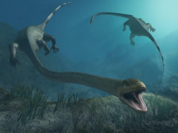 Berikutnya ada Tanystropheus. Makhluk ini sebenarnya adalah reptil darat yang bisa mencapai 20 kaki (6 meter) panjangnya. Makanan utamanya adalah ikan, sehingga sering terlihat menyelam ke laut untuk mencari makanan, dan menghabiskan sebagian besar waktunya di air. Hewan ini diperkirakan telah hidup 215 juta tahun silam. Kesimpulannya sih, ini bisa dikatakan hewan amphibi pulsker.