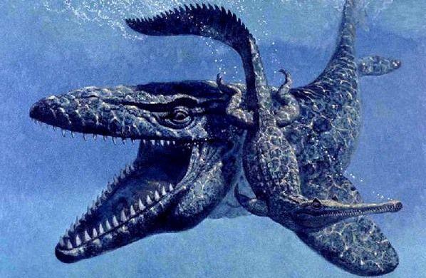 Juga ada monster Mosasaurus yang panjangnya mencapai sepanjang 15 meter. Kepala Mosasaurus seperti buaya saat ini, dilapisi dengan ratusan gigi setajam pisau cukur yang bisa membunuh bahkan musuh yang paling yang dilapisi kulit sangat tebal sekalipun. Ngeri juga nih pulsker.