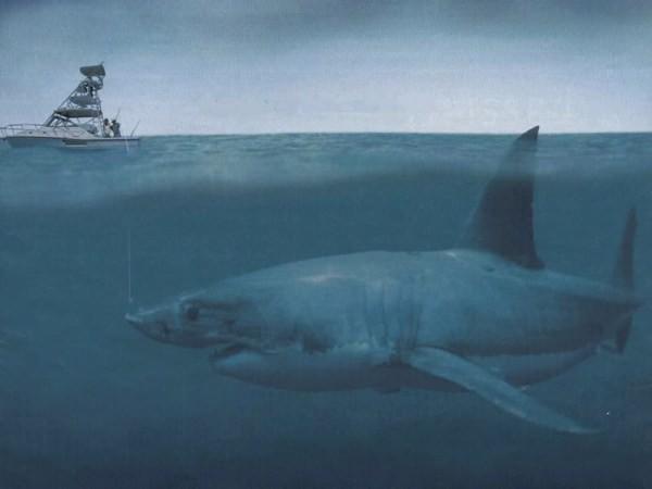 Terakhir inilah predator terbesar di dalam sejarah lautan dan hiu terbesar yang pernah tercatat dalam sejarah. Seperti namanya, hewan ini memang besar, dan menakutkan pulsker. Bayangkan saja, rahangnya bisa mencapai 1/2 meter dan memiliki gigi berjeruji seperti gergaji dengan 2 deretan gigi di atas dan bawah. Hewan ini mampu mencapai panjang lebih dari 20 meter, lebih panjang dari sebuah bis. Ya, ini adalah Megalodon sang monster laut yang dikenang sepanjang masa. Selain besar ngeri juga ya pulsker makhluk laut jaman prasejarah dulu.