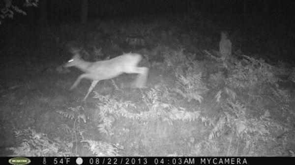 Ini adalah hasil foto yang dihasilkan dengan infrared ditengah hutan. Dalam foto ini tampak seperti penampakan bayi yang berdiri didedaunan. Kira-kira apa yang dilakukan anak kecil itu jam 4 pagi Pulsker?