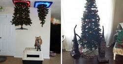 Kumpulan Orang-Orang yang Melindungi Pohon Natalnya Dari Hewan Pliharaan..Lucu Banget!