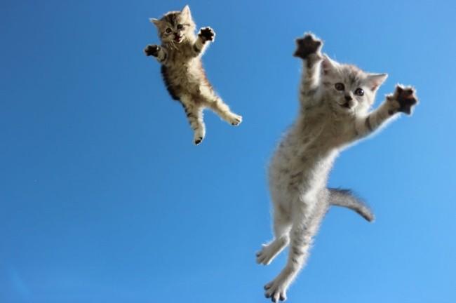 Like a bird. Kucingnya bisa terbang tuh pulsker haha.