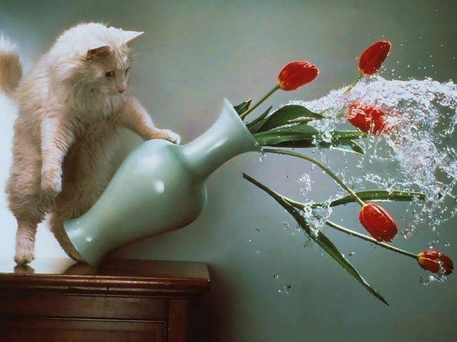 Upss kesenggol. Awas vas nya bisa jatuh cing.