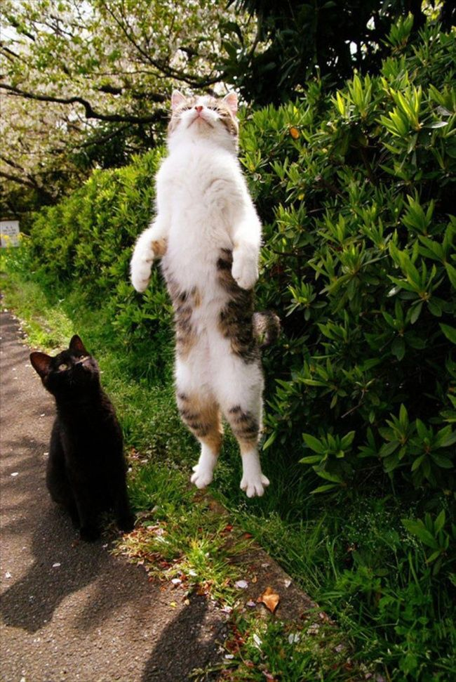 """Lompat setinggi mungkin kawan"" kata si hitam."