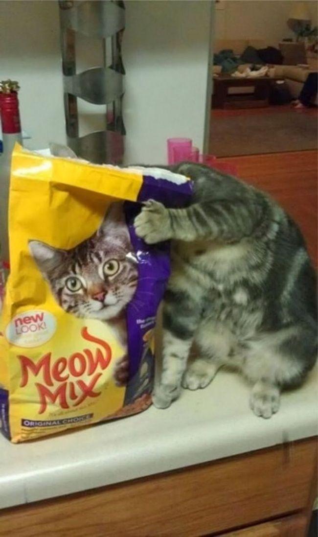 Hayo lho.. kepala asli atau gambar bungkus makanan kucing tuh?
