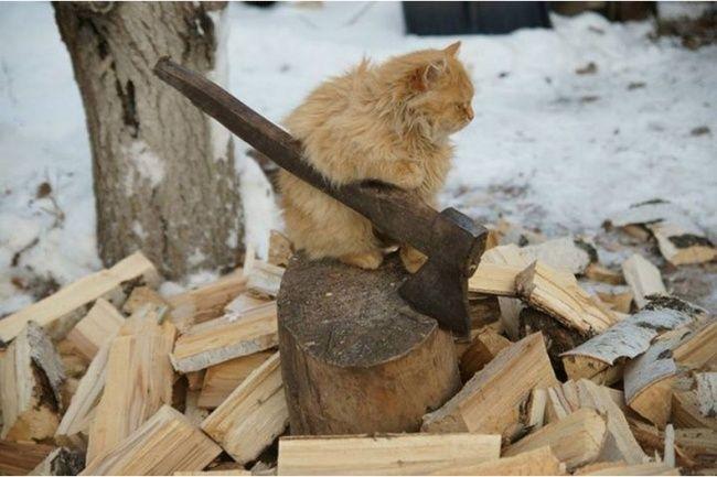 Besar kapaknya dari kucingnya. Emang kuat ngangkatnya cing?