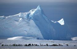 Masih Bingung Apa yang Membedakan Kutub Utara dengan Kutub Selatan? Ini Dia 7 Perbedaan Mendasar Keduanya