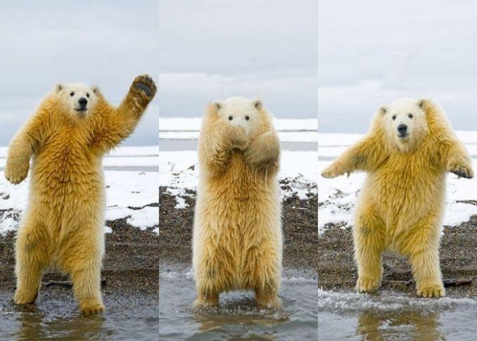BErunag kutub saat dihilangkan leernya jadi lucu banget, karena lengannya sejajar dengan kepalanya.
