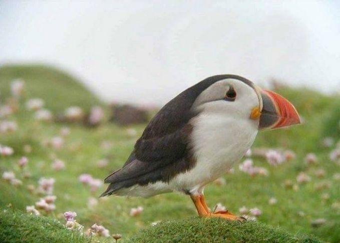 Burung memang nggak ada lehernya, tapi saat bagian kepala dihilangkan bentuk burung ini jadi aneh banget ya Pulsker.