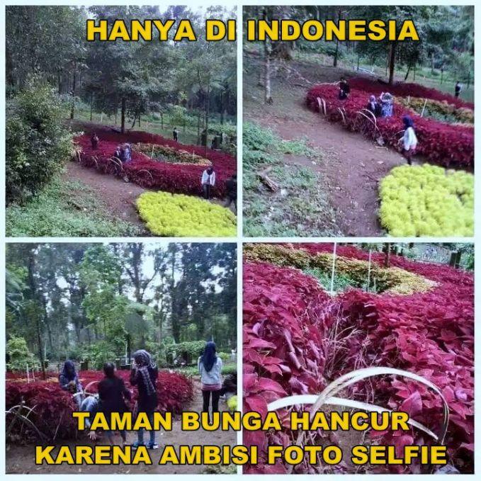 Kejadian ini terjadi tahun lalu Pulsker, saat lagi musim-musimnya tempat wisata dengan tumbuhnya bunga cantik ditaman. Sayangnya banyak orang yang berkunjung kesana hanya memikirkan hasil fotonya aja tanpa menjaga kecantikan taman bunga tersebut. Hasilnya, jadi rusak semua deh bunganya. Hanya di Indonesia yang kaya gini nih.