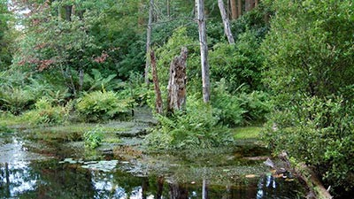 Bridgewater Triangle, Massachusetts Sepertinya tempat yang bernama segitiga memang menyimpan sisi misterius Pulsker. Kali ini datangnya dari Bridgewater Triangle, Massachusetts. Tempat yang berada di bagian tenggara Massachusetts ini mnyimpan banyak cerita supranatural. Dikatakan di tempat tersebut sering terjadi penampakan makhluk Cryptid yang menyeramkan. Beberapa diantara menyerupai kera besar, burung petir, peri bahkan Pterodactyl. Selian makhluk-makluk itu sering ditemukan hewan yang mati seperti termutilasi. Tidak sampai disitu saja, di tempat ini juga sering muncul penampakan UFO.