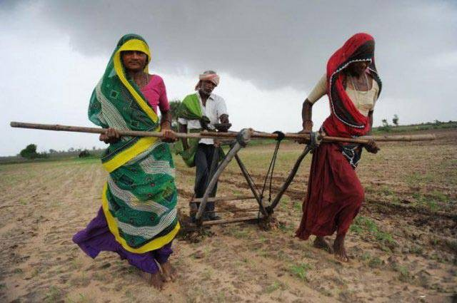 Ini adalah potret wanita India sedang membajak sawah dengan menggunakan sari. Sedangkan prianya dibelakang hanya mendorong saja.