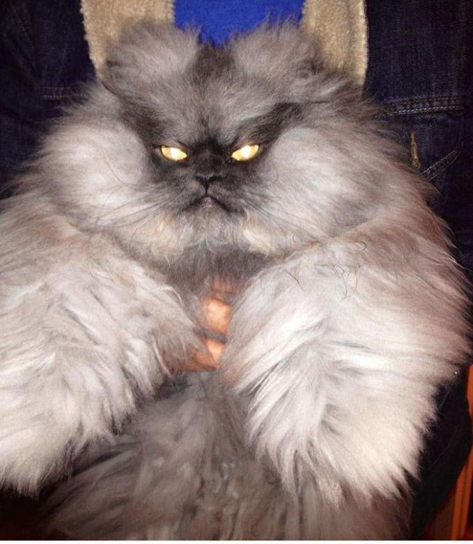 13 Wajah Marah Dan Sinis Kucing Terlihat Lucu Atau Nakutin Ya
