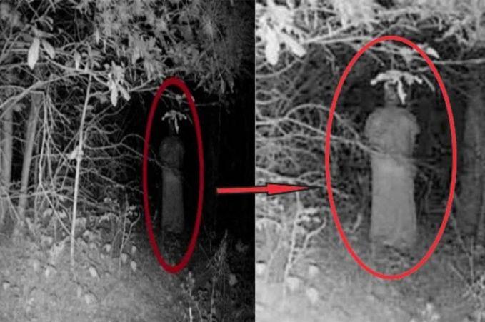 Foto ini sepertinya diambil didalam hutan menggunakan infra red. Saat dilihat dari jauh hanya seperti pohon biasa, tapi saat foto ini di zoom, penampakan itu terlihat seperti pocong..hii