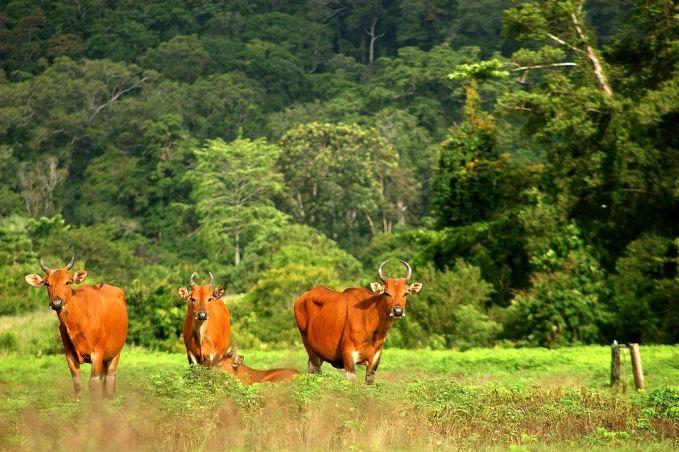 Taman Nasional Meru Betiri, Jember-Banyuwangi. Taman nasional yang terletak antara 2 kabupaten ini menyuguhkan keindahan hamparan pepohonan hijau. Nggak hanya itu saja disini juga terdapat banyak macam flora fauna lho pulsker, seperti bunga bangkai, waru, macan tutul, rusa, dan lain-lain.