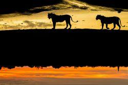 Selama 6 Tahun Fotografer Ini Mengabadikan Kehidupan Hewan di Alam Liar Afrika dalam Bentuk Siluet