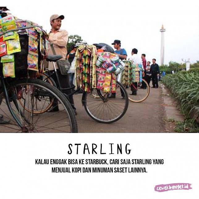 Starling Nggak punya duit untuk nongkrong di coffe shop Sturbuck? Tenang Pulkser, di Di Indonesia banyak banget kok Satrling yaitu pedagang kopi keliling yang menyediakan berbagai macam kopi dan minuman lainnya.