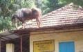 Kekonyolan di India Memang Seperti Pada Filmnya, Kocak dan Menghibur...Ini Contohnya !