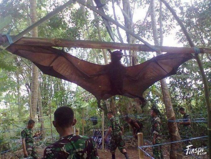 Orang Bati Makhluk mitologi ini dikatakan berasal dari Pulau Seram, Maluku. Menurut legenda, Orang Bati adalah manusia yang memiliki sayap kelelawar. Dikatakan bahwa Orang Bati tinggal di Gunung Kairatu. Kerjaan mereka adalah menculik dan memakan anak-anak..hiiii