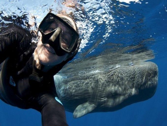 Wanita ini berhasil selfie dengan ikan paus..Epic moment banget nih!