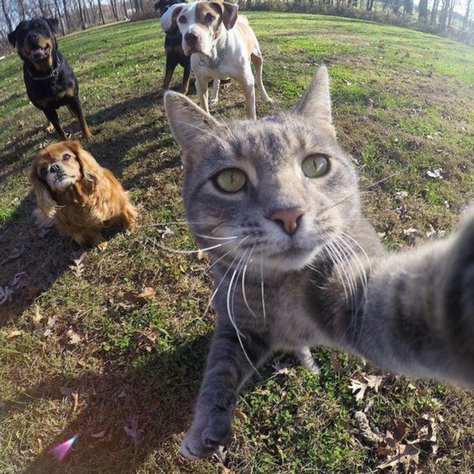Nggak cuma manusia aja yang bisa selfie. Kucing ini juga sedang berselfie dengan kawanan anjing. Keren banget lah!