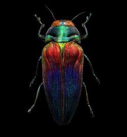 Seperti Ini Jadinya Jika Serangga-Serangga di Sekitar Kita Difoto Secara Mikroskopik, Keren