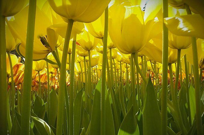 Foto yang diambil oleh Dewi Bagerman di sebuah taman bunga ini berhasil meraih Grand Prize pulsker. Anak berusia 11 tahun berasal dari negeri Belanda yang memang kaya akan bunga-bungaan.