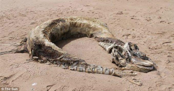 Makhluk laut aneh lainnya juga ditemukan di pantai Skotlandia. Penampakan bangkai makhluk laut ini tidak pernah terlihat sebelumnya dan tak banyak yang tahu akan hewan ini pulsker. Sampai menjadi sebuah misteri.