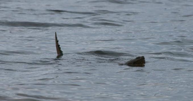 Sedangkan di danau Alakali yang berada di Sandhills , Northwestern Nebraska terdapat makhluk aneh yang tertangkap kamera nih pulsker. Digambarkan makhluk ini sebagai buaya sepanjang 40 kaki dengan kulit abu-abu. Pertama kali terlihat pada Agustus 1921 dan ramai jadi perbincangan. Wah, ngeri juga ya makhluk-makhluk aneh dan misteriusnya pulsker.