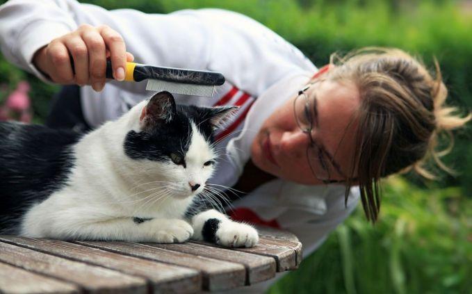 Agar Kucing Tetap Sehat dan Memiliki Bulu Indah nan Lucu, Ada Baiknya Nih Simak 7 Tips Berikut