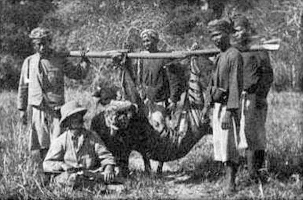 Juga di Bali pulsker, di pulau dewata ini ada hewan endemik yang resmi dinyatakan punah pada 27 September 1937 silam. Harimau Bali terkahir yang ditembak mati terjadi pada tahun 1925 di Sumber Kima, Bali Barat. Kepunahannya adalah akibat perburuan liar dan rusaknya habitat mereka di alam liar.