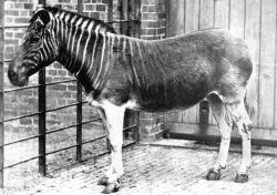 10 Hewan Mamalia yang Telah Punah dalam Dua Abad Terakhir, Menyedihkan !