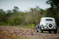 """10 Foto Menakjubkan Ketika Jutaan Kepiting """"Menginvasi"""" Jalanan di Kuba"""