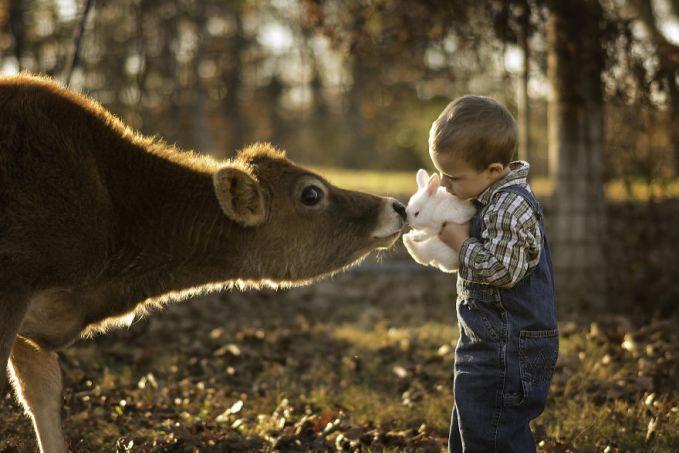 Anak-anak seumuran dia biasanya kalau ada sapi kadang ketakutan ya pulsker?. Tapi anak Phillip Haumesser nampak senang bermain-main dengannya. Kelincinya juga lucu banget.