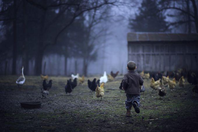 Sekali-sekali bermain bersama hewan peliharaan di kandang seperti ayam-ayam ini memang mengasyikkan pulsker bagi anak-anak. Daripada ngadepin gadget main game mulu?.