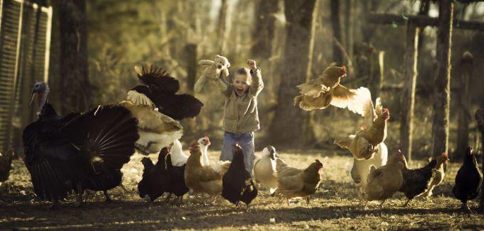 Eh, ayam-ayamnya lagi enak-enak makan malah direcokin sama dia. Duh, jadi kabur semua kan?. Namanya juga anak-anak pulsker, gimanapun tetap lucu.