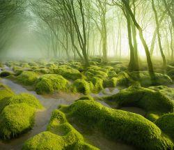 10 Hutan Paling Indah Sekaligus Misterius di Dunia, Berani Berpetualang Kesana?
