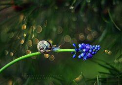 8 Foto Keindahan Alam yang Diambil dengan Teknik Makro, Ntap Banget !