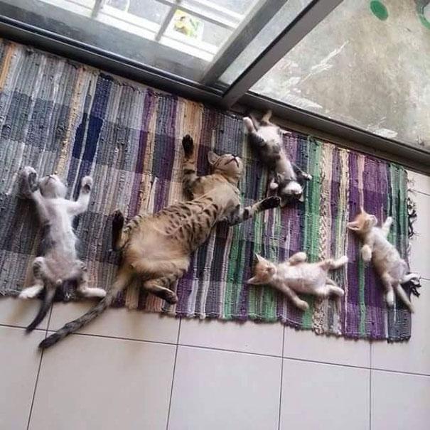 Induk kucing yang baik banget ya?. Mengajarkan cara hidup sehat kepada sang anak sejak dini. Masa kita kalah sama dia?.