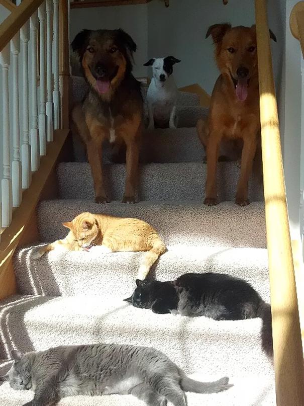 Sesekali lah si anjing ngalah dulu pas lagi berjemur di depan rumah. Gantian biar semua kebagian.