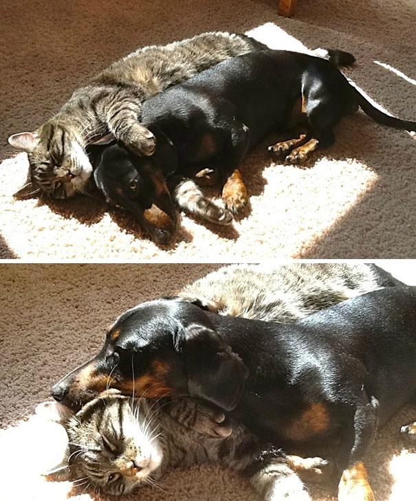 Siapa bilang kucing sama anjing berantem mulu. Nih buktinya, mereka bisa tenang-tenang aja tuh berbagi sembari berjemur pulsker.