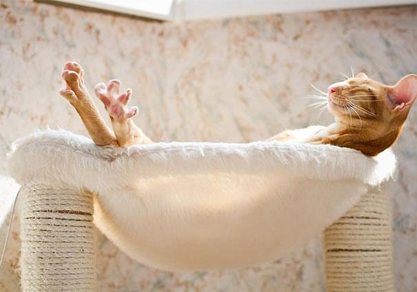Saking enaknya sampai-sampai dia ketiduran lho pulsker. Nikmatin banget quality time-nya nih kucing. Enjoy dah.