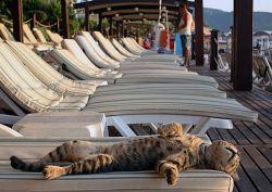 Biar Sehat Kucing Juga Perlu Sinar Matahari, Lihat Nih 10 Foto Lucunya Pas Mereka Berjemur