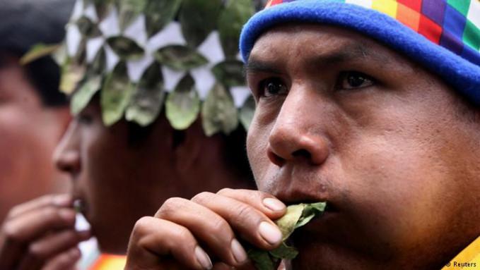 Daun tanaman koka menyimpan senyaa koka yang mirip banget sama kokain pulsker. Di beberapa negara Amerika Latin, mengunyah koka adalah hal yang biasa. Jika di fermentasi dan diolah secara kimia akan menghasilkan kokain.