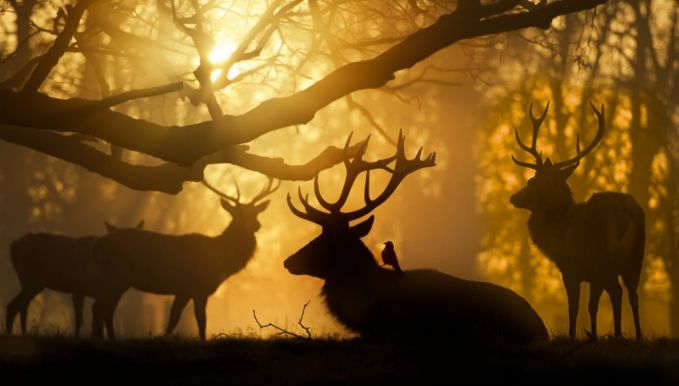 Ini adalah potret indahnya matahari terbenam di Taman Bushi di London, Amerika Serikat.